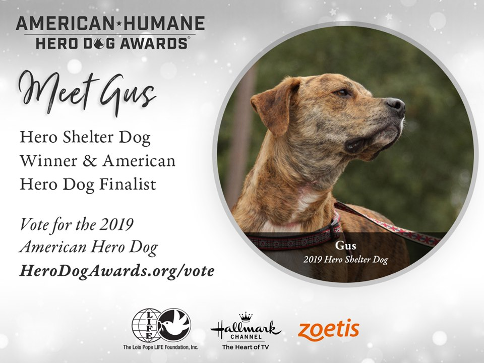 Gus the Hero Shelter Dog